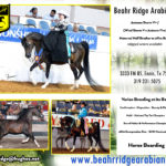 January 2018: Beahr Ridge Arabians